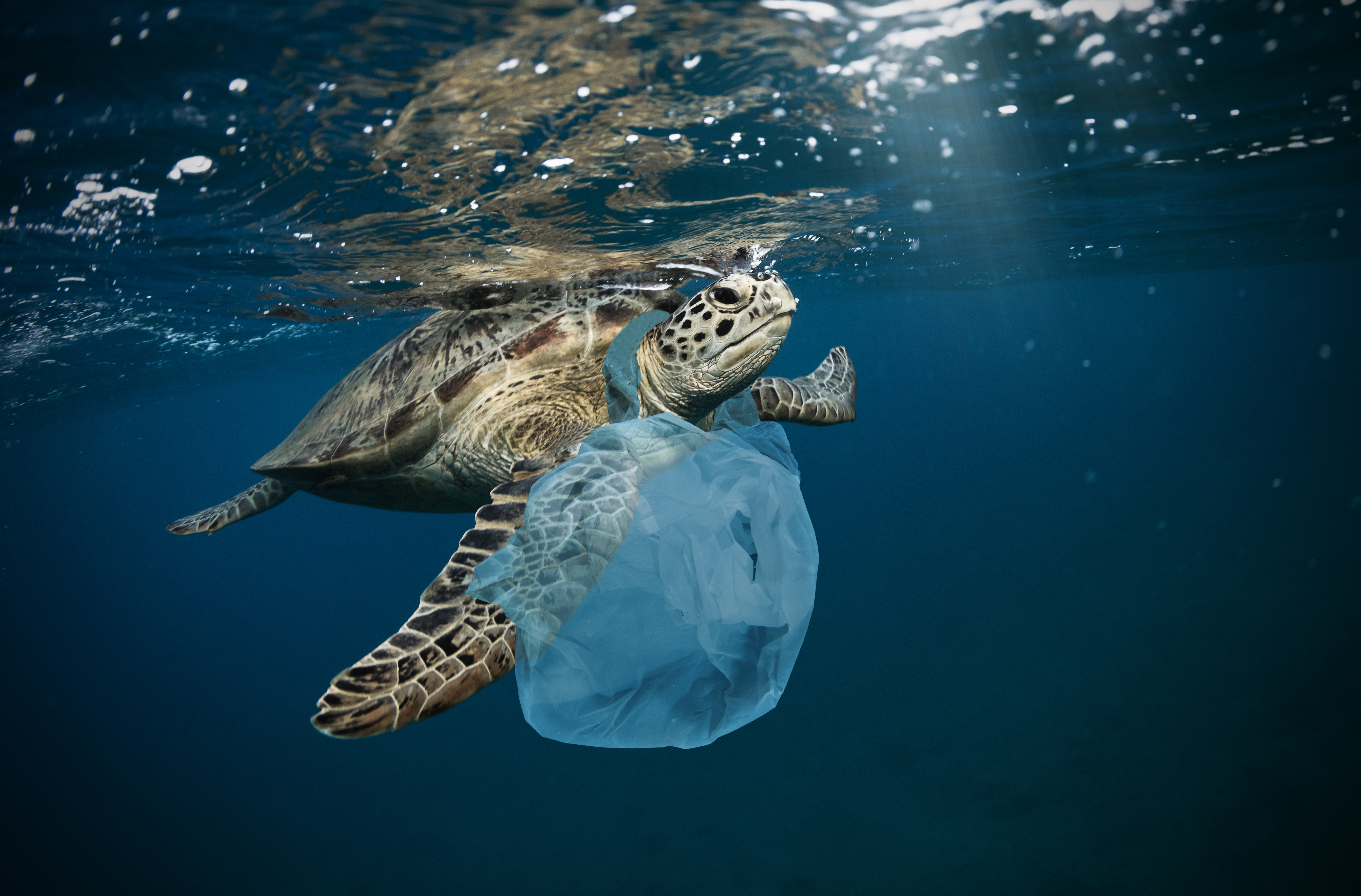 Underwater global problem with plastic